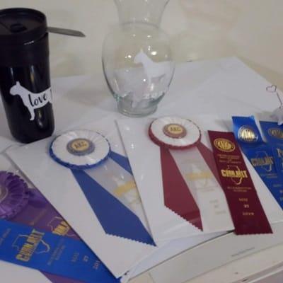 dog show ribbons and trophies